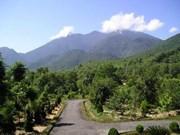 越南白马国家公园重视珍稀树木遗传资源保护工作
