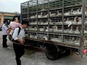 越南主动采取措施加强禽流感防控工作