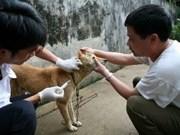 FAO将协助越南安沛省加强狂犬病预防工作