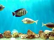 第二次越南海洋生物资源国际研讨会在河内市举行