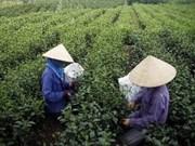 越南北部山区、丘陵地区经济社会发展规划获批