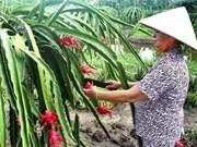新西兰协助越南前江省发展优质果树