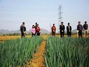 和平省有效应用韩国栽培蔬菜技术