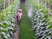 越南前江省:提高主要农产品国际竞争力