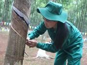 越南成为世界第三大天然橡胶生产国