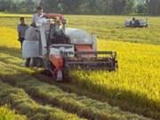 英国提供7000万美元协助越南大型稻田种植模型发展