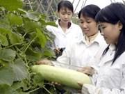 越南与莫桑比克合作在粮食作物研究加强合作