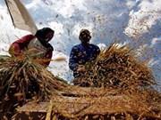 东盟注重改善农村生活水平