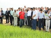 越南将继续资助古巴发展农业