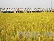 越南注重制定出口稻米的长期生产计划