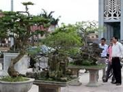 2014年越南顺化文化节:北中南三部观赏植物展开展