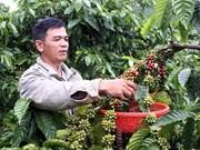 2013—2014年季节,越南咖啡出口额可达30亿美元