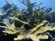 印尼三分之一的珊瑚礁遭到破坏
