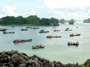 越南海防市第三次凤凰花卉节即将举行