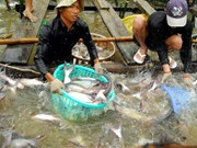 越南后江省呼吁日本企业加大对后江省投资力度