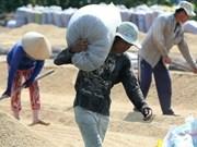 越南九龙江三角洲确保全国的粮食安全