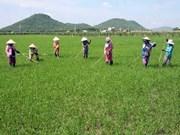 越南广南省同老挝色空省加强妇女工作务实合作