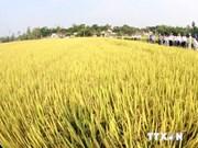 越南155个模范农产品受表彰