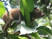 越南着力打击濒危野生动物贩卖活动