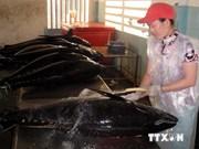 越南对荷兰金枪鱼出口猛增