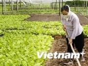 越南河内市无公害蔬菜交易平台问世