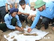 越南政府批准另成立烈士遗骸DNA鉴定中心