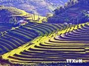 来越南安沛省观赏美丽的梯田看糍粑制作比赛