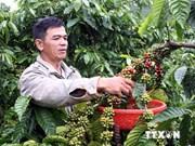 越南同奈省咖啡出口量创有史新高