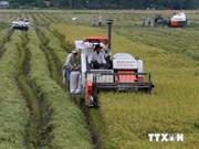 农业结构重组将成为九龙江三角洲地区经济论坛的焦点