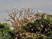 越南海阳省努力把鹭洲景区建设成为最具吸引力的旅游地