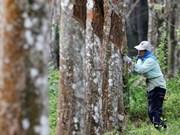 马、泰、印尼成立区域性橡胶市场