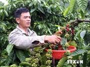 越南咖啡面向可持续发展