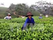 2014年第5次越南林同省茶叶文化周即将举行