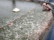 芹苴市至2020年水产养殖发展计划出台
