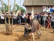 越南巴那族的刺牛节