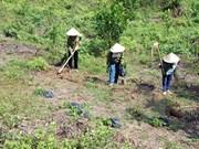 越南茶荣省出资520多亿越盾保护与发展防护林