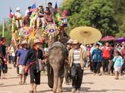 老挝2015年大象节将于年末举行