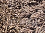 越南木薯可持续发展国际研讨会在西宁省举行