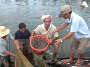 2020年越南金瓯省力争将虾苗产量提升为200亿尾