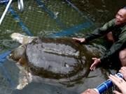 河内扩大还剑湖巨龟治疗池的面积