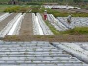 越南与墨西哥扩大农业领域合作