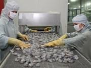 VASEP坚决保护越南虾类出口企业权益