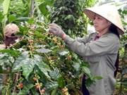 VICOFA成立咖啡行业出口保险基金会