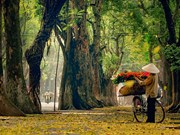 组图:花卉小货郎为河内秋天增添了一道亮丽的风景