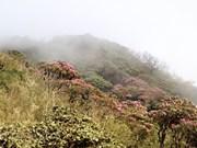 组图:西北山区上盛开的花朵   美不胜收的自然风光