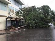 组图:第九号台风登陆越南造成巨大损失
