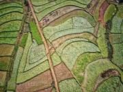 组图:木州县索兰村美丽如画的花田