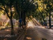 组图:入秋看首都河内最美街道