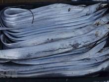 乂安省渔民出海捕捞收获丰