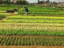 富安省蔬菜花卉种植园恢复生产 迎来春季